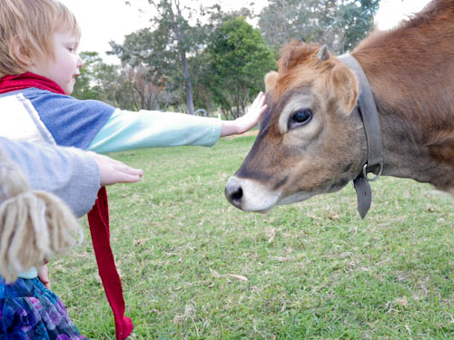 Patting the cow at New Gokula Hare Krishna Farm, Millfield, NSW, June 2014
