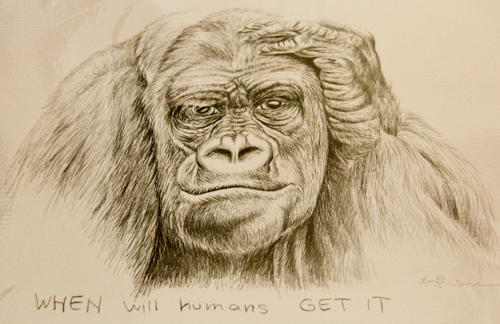 Drawing of a chimpanzee, Jo Frederiks, vegan artist, animal activist, using art to raise awareness of animal suffering and inspiring change to a cruelty-free lifestyle, August 2014