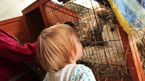 Delaney looking at a rabbit, August 2014