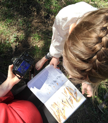 Looking at our bird book, August 2014