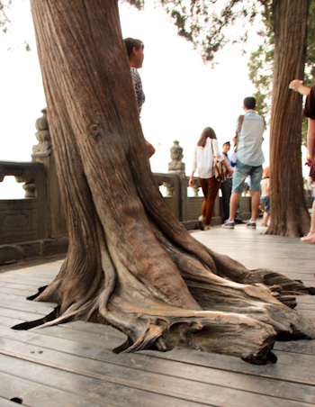 Tree at Summer Palace Imperial Gardens, Beijing, China, August 2014