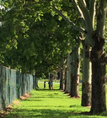 Three girls playing in the shade of a line of trees on a hot summer's day, Macksville, NSW, January 2015