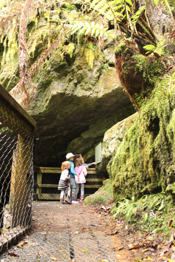 On the pathway to Junee Cave, Tasmania, January 2015