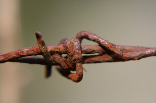 Barbed wire, picture by David