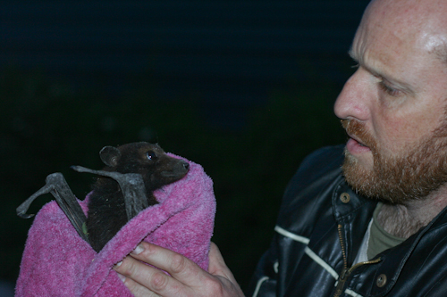 David catches a flying fox, August 2010
