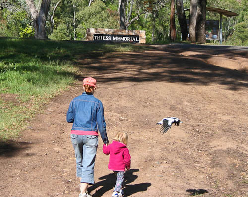 Being swooped by a magpie at Heifer Creek, November 2010