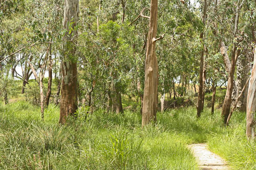 The Condamine River forest at Archer's Crossing, November 2010