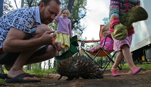 Meeting the echidna, November 2010