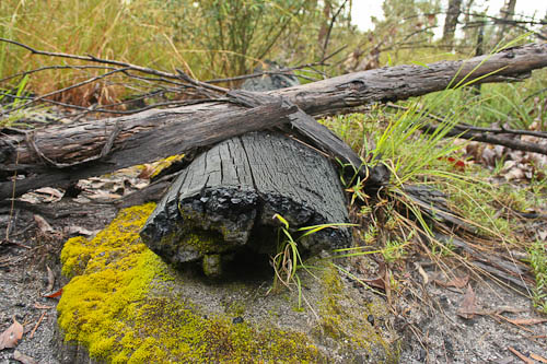 Burnt log at Mount Moffat, November 2010