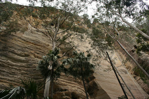 Carnarvon Gorge, November 2010