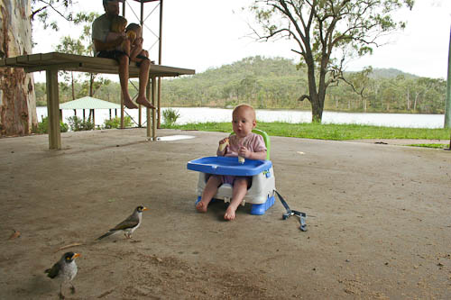 Birds at Mount Morgan, November 2010