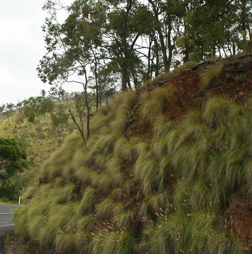 Grassy hills outside Mount Morgan, November 2010