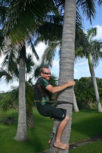 David climbing coconut tree, November 2010