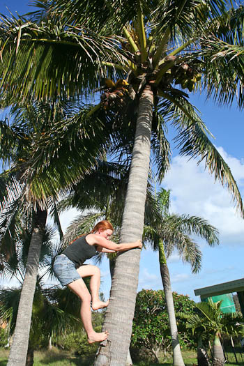 Lauren climbing coconut tree, November 2010