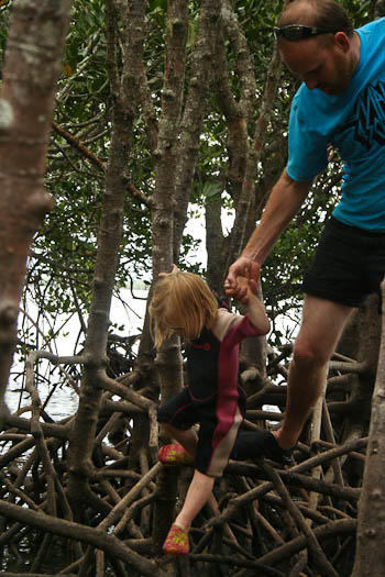 Climbing in the mangroves, November 2010