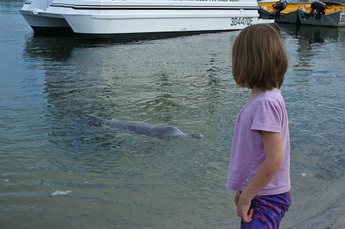 Aisha with a dolphin, Tin Can Bay, December 2010
