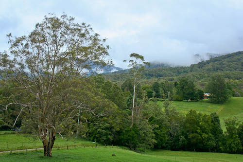 The countryside outside Bellingen, January 2011