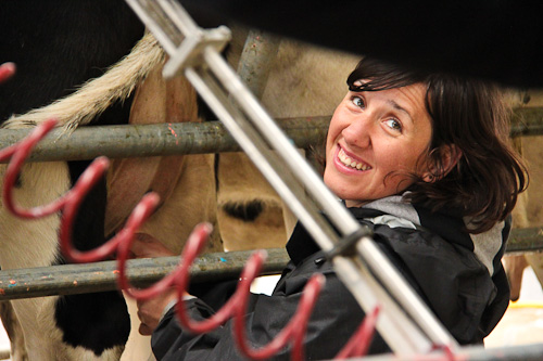 Milking the cow, June 2011