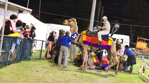 Camel racing at the Beenleigh Show, September 2011