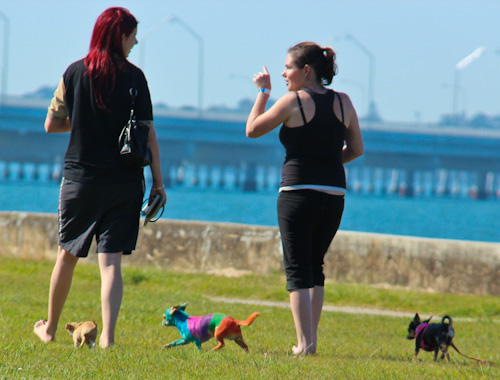 Colourful dog at Brighton Beach, September 2011