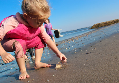 Calista picking up a jellyfish, September 2011