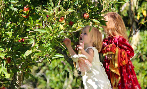 Calista and Brioni picking apples, May 2012