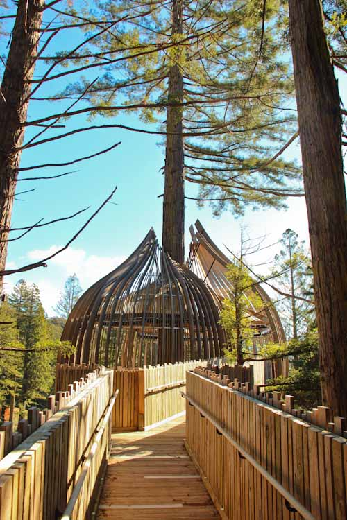 Redwoods Treehouse, Warkworth, May 2012