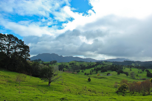 Northland countryside, May 2012