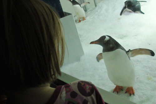 At Kelly Tarlton's Antarctic Experience, Auckland, June 2012