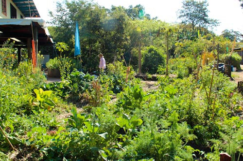 Northey Street City Farm, September 2012