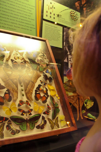 Brioni looking at moths and butterflies at the Queensland Museum, September 2012