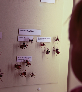 Delaney looking at spiders at Queensland Museum, September 2012