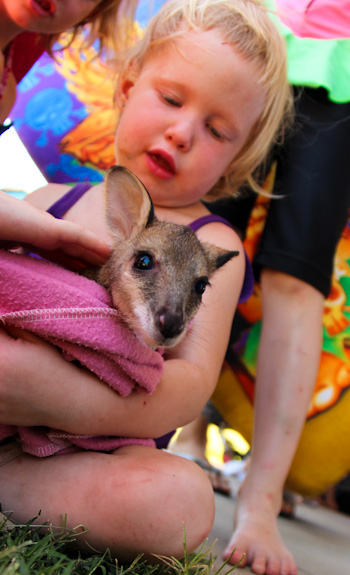 Delaney with a wallaby joey, November 2012