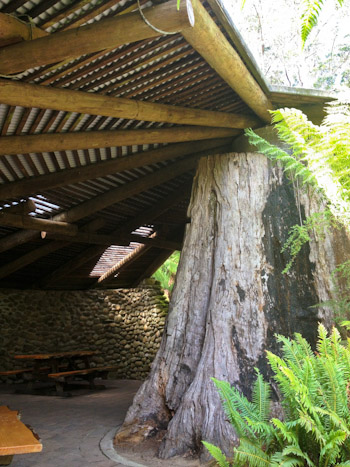 Picnic shelter at Hastings Thermal Pool, Tasmania, February 2013