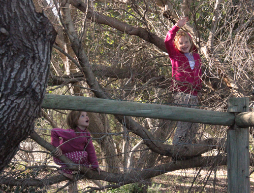 Calista and Brioni climbing a tree, June 2013