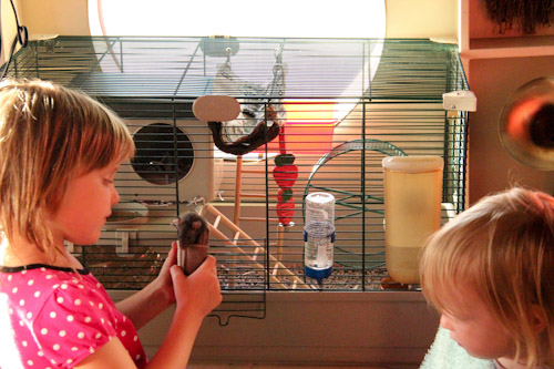Calista holding a pet rat in front of the cage, July 2013
