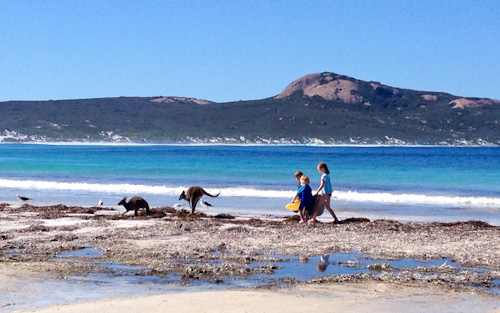 Kangaroos at Lucky Bay, Cape Le Grand National Park, Western Australia, April 2013