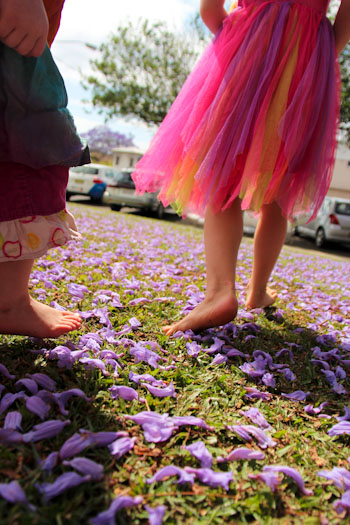 Walking on jacaranda blossoms, Grafton, October 2013