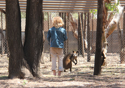 Sneaking up on a wallaby, Taronga Western Plains Zoo, Dubbo, NSW, October 2013